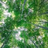 『緑のカーテン、緑のシャワー』の画像