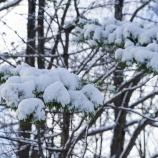『雪の中In the snow.』の画像