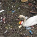 『テムズ川の汚染と白鳥たち』の画像