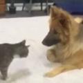 ネコが犬に近づいた。くっついてスリスリする → 猫はやっぱり気まぐれです…
