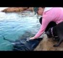 【キラー・エイ】海で遊泳中の男性死亡、エイが襲撃か 豪