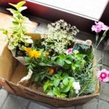 『物流センターの花壇2013』の画像
