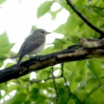 鳥写真マンガ