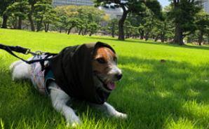 皇居外苑でふわふわの芝生を満喫