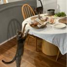 テーブルで作るオープンサンドと、シュークルト風煮込みの夜ごはん