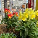 『【朝のご挨拶】昨日のように埼玉県での新型コロナ感染者が多いと苦しくなります。でも、必ず道は開けるもの。一緒にがんばりましょう。』の画像