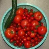 『夏は忙しいねぇ。毎日、朝晩洗濯。野菜の収穫と水やり。』の画像