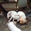 子犬2匹がハンモックで激しく揺られるも…ぐっすりとお昼寝(動画)