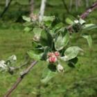 『春をひろいながら』の画像
