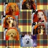『2013-10-28のわんちゃん達』の画像