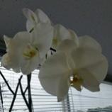 『まだ咲いています!』の画像
