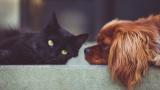 娘「ペット買いたい!猫!わんちゃん!」 ワイ月収16万「」
