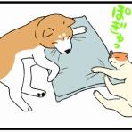 柴犬どんぐり三毛猫たんぽぽ