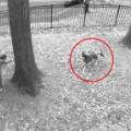 イヌは庭でまだ遊びたかった。もう家に入る時間だよ! → 犬とお父さんの「たたかい」が始まった…