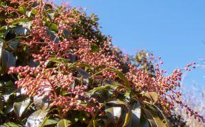 季節の花だより はなつうWEST Blog