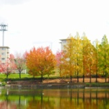 『【南千里】 佐竹公園(菩提池)の紅葉実況とバリアフリー状況 2015年11月16日』の画像