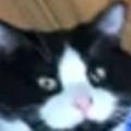 ネコ飼いがホウキで床の掃除を始める。手伝うよ♪ → 猫はこうした…
