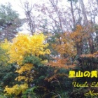 『里山の黄葉(紅葉) 』の画像