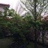 『やっと春が(実感)』の画像