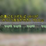『【スナイパになる為に その16】ちんがり』の画像