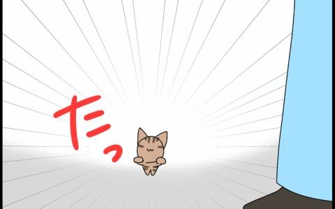 【保護猫】突然の出会い【予期せぬ出来事】