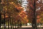 11月になって紅葉が進む!〜季節が変わっていくのを見よう〜