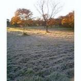 『早起きは三文の得(今朝の風景5)』の画像
