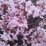 『今日のグループホーム(お花見)』の画像