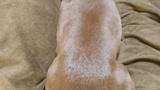 【急募】膝の上のイッヌをどかす方法(※画像あり)