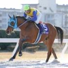 『【名古屋・スプリングC結果】ブンブンマルが重賞連勝』の画像