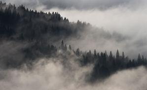 杉林の朝霧はまさに
