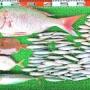 沖はオオモンハタ、ブリ、マダイ、アジ、サバ!湾内はハイカラでマダイ、ヒョウゴ、チヌ!