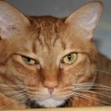『豪での猫の大量安楽死計画と小笠原諸島での活動』の画像