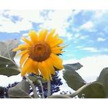 『夏の風景』の画像