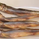 『国東の食環境(159)鵡川のシシャモ』の画像