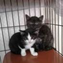 ▼最新▼飼い主さんを募集している猫たち(6月中旬)