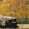 往く秋の輝き Maruseppu