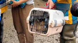 【熱海土石流】「中に猫がいる」 機転きかせた隊員、6分間の救出劇