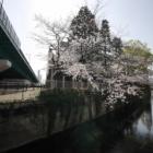 『西武新宿線~中井駅付近の桜 2020/04/14』の画像