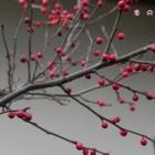 『冬の庭先』の画像