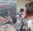 ケージに閉じ込められたまま海に投げ捨てられた犬 満潮ギリギリに助けられる