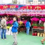 『【香港最新情報】「歳末恒例、花市開催」』の画像