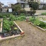 家庭菜園楽しすぎワロチwwwwww