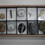 『化石標本をつくろう・セメントでつくる化石標本』の画像