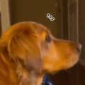 イヌと一緒に「スター・ウォーズ」を見ていた。ダース・ベイダーが現れる → 犬はこうなった…