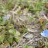 『小さな 花』の画像