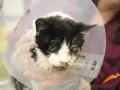 愛猫が車に轢き殺されて自宅の庭に埋葬→5日後、そこには墓から這い出て庭を歩き回る愛猫の姿が(画像あり)