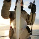『1月31日 釣果 スロージギング 魚種多し!!』の画像