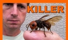 【虫】   日本のモンスター、スズメバチを自分のペットとして飼う外人。  海外の反応