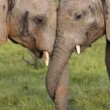 『ゾウのキスと「拈華微笑」』の画像